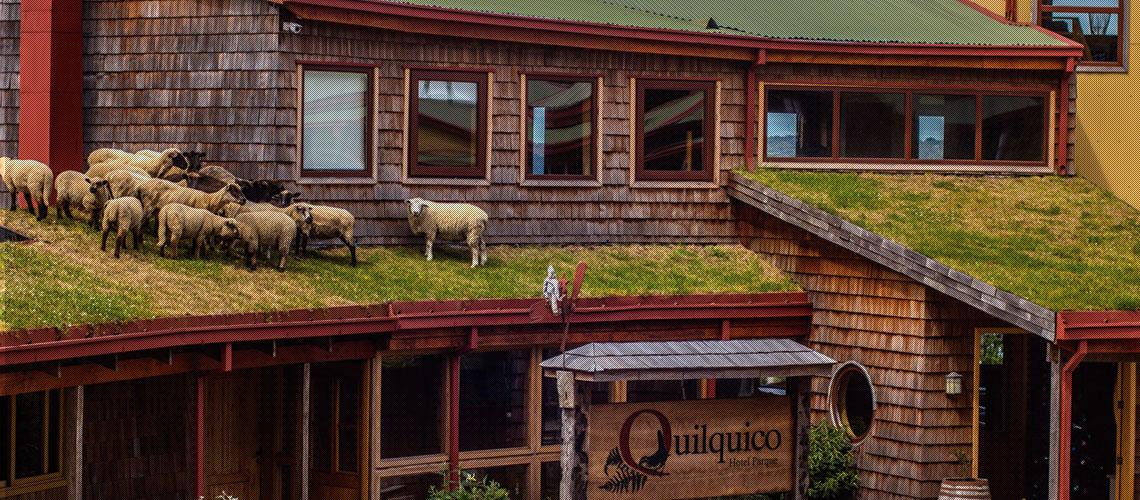 ovejas-hotel-parque-quilquico